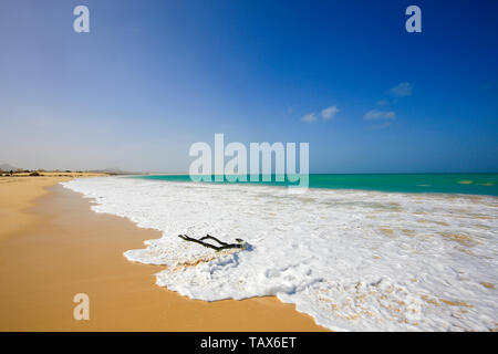 20.02.2019, Sal Rei, Boa Vista, Cape Verde Islands - Praia de Chaves, dead wood on the sandy beach. 00X190220D007CAROEX.JPG [MODEL RELEASE: NOT APPLIC - Stock Photo