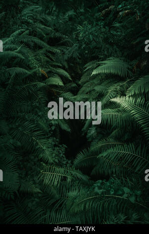 Ferns in the forest, Bali. Fern leaves, green foliage. Close up of beautiful growing ferns in the forest. Natural floral fern background in sunlight. - Stock Photo
