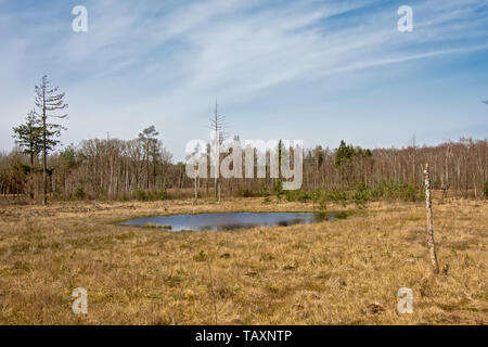 Heather landscape with fen and forest in the backgroundon a sunny day with blue sky with soft clouds - Stock Photo