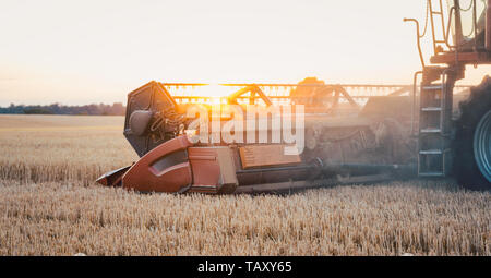 Combine harvester harvesting wheat during sunset - Stock Photo