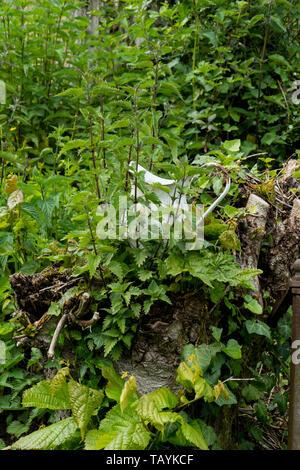 Ein alter Krug , Kanne aus email von Brennesseln überwuchert, bewachsen - Stock Photo