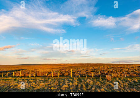 Steppe landscape in Patagonia at sunset between Punta Arenas and Puerto Natales, Chile. This landscape is generic for southern Chile and Argentina. - Stock Photo