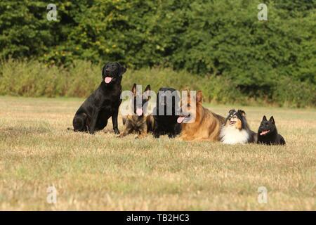 6 dogs - Stock Photo