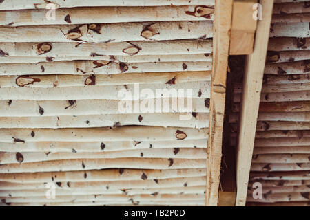 Not sawn birch logs. For the kindling fire. - Stock Photo