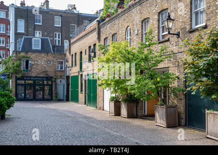 Small trees in containers outside houses in Reece Mews, South Kensington, London. England - Stock Photo