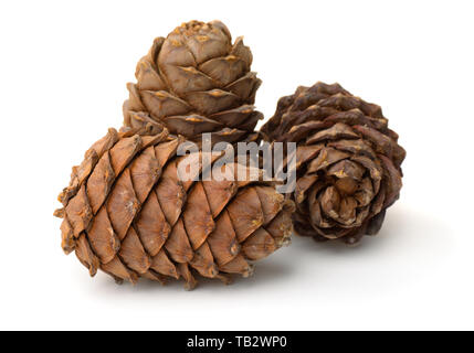 Group of ripe pine cones full of nuts isolated on white - Stock Photo
