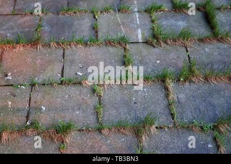 Close up detailed view on a cobblestone street pavement in high reoslution - Stock Photo