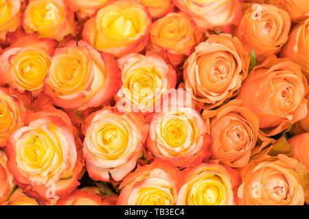 A huge bouquet of orange roses. orange roses background. orange roses horizontal seamless pattern. orange roses arrangement. - Stock Photo