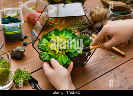 Woman transplanting plants in glass florarium with various tools on table. Home gardening concept - Stock Photo