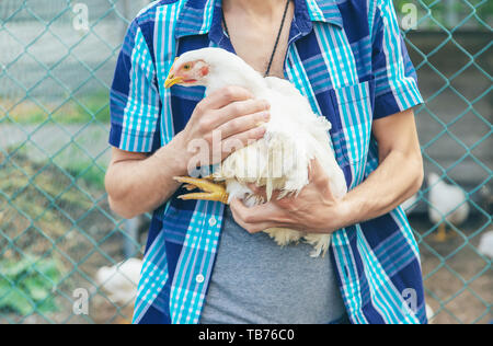 man farmer holding a chicken in his hands. Selective focus. nature. - Stock Photo