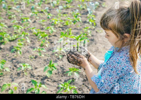 child plants and watering plants in the garden. Selective focus. - Stock Photo