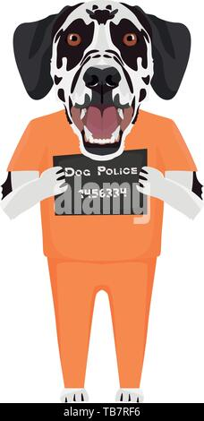 Police photo prison uniform Dalmatian - Mugshot of the guilty dog. The puppy dog eyes can be angry no dog lover. - Stock Photo