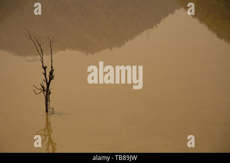 Dead trees in the water. mountain shadow - Stock Photo