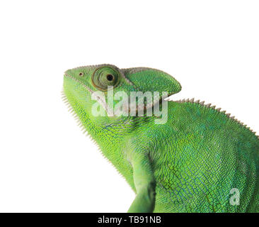 Cute green chameleon on white background - Stock Photo
