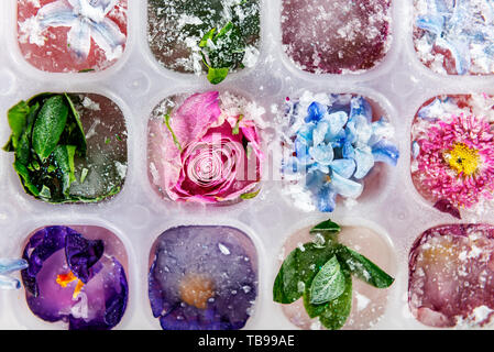 Tray with Frozen Flowers in Ice Cubes on grey Background, top view, close up image - Stock Photo