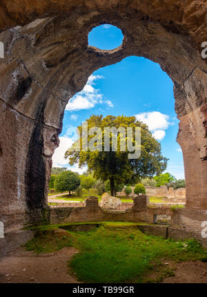 Villa Adriana - Rome Tivoli - Italy - large tree seen through large crumbled walls chasm in ancient Roman palace with circle-shaped hole on ceiling - Stock Photo