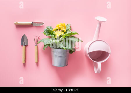 Gardening background with watering can and gerbera flowers on pink background. View from above. - Stock Photo