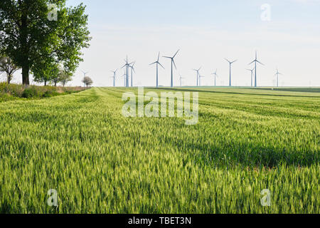 Wheat field at sunset with wind turbines in the distance, light glowing on the wheat spikes, and a tree on the left. Copy space at the bottom. - Stock Photo