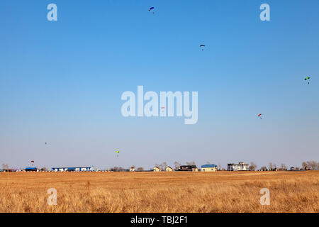 Six paratroopers paragliding landing on the yellow field during extreme sports and jumping from an airplane from a height in the blue sky over low hou - Stock Photo