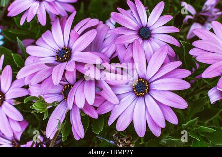 gerbera daisy flower background. Outdoors women summer party concept - Stock Photo
