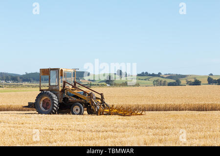 harvester works in wheat field in summer day in new zealand - Stock Photo