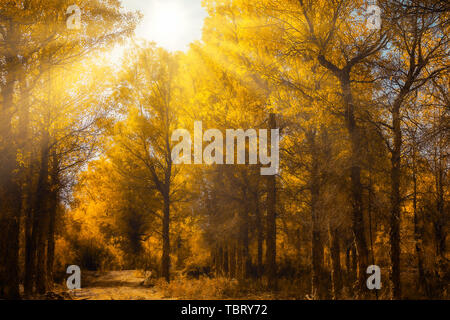 The birch forest in the afternoon. - Stock Photo