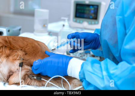 the doctor makes an injection to the dog during operation. - Stock Photo