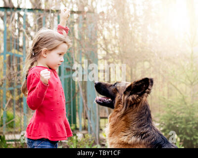 Pretty little girl, Gives a command to sit to german shepherd dog. - Stock Photo