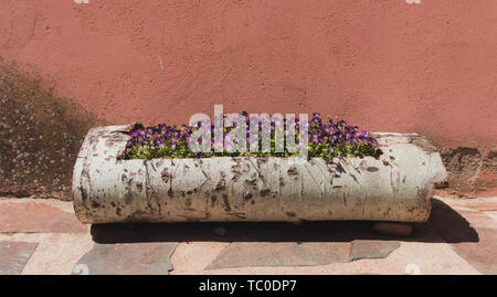Flowerpot of purple pansies on a wooden trunk with a salmon background behind - Stock Photo