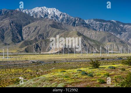 Spring wildflowers and the windfarm in the San Gorgonio Pass near Palm Springs, California, USA. - Stock Photo
