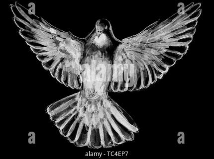 The digital watercolor illustration of  pigeon in shades of white, gray, black. Symbol of the Holy Spirit, isolated on black background. - Stock Photo