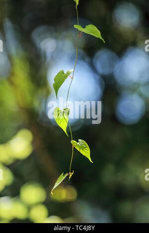 Newborn leaves in spring - Stock Photo