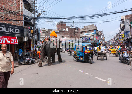 Elephant crossing a busy road in Amritsar, Punjab, India