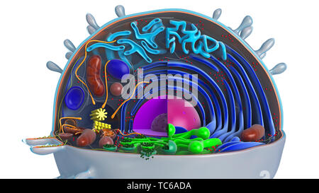 Animal cell in section, multi-colored, close view. 3D rendering - Stock Photo