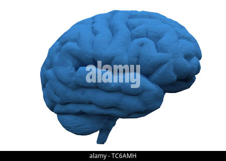 Human brain. 3D rendered model - Stock Photo