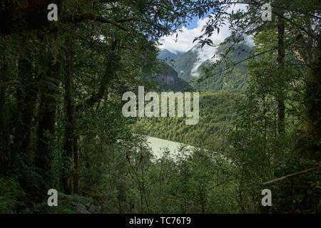 Forest view of Laguna Tempanos in Queulat National Park, Patagonia, Aysen, Chile. - Stock Photo