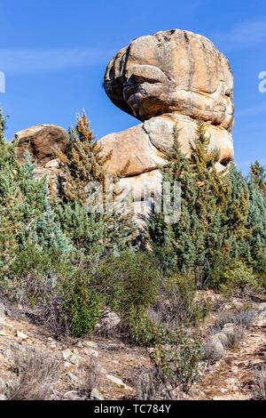 Granite cliffs and conifers at Fig Hill in The Pedriza Regional Park. Madrid. Spain. Europe. - Stock Photo
