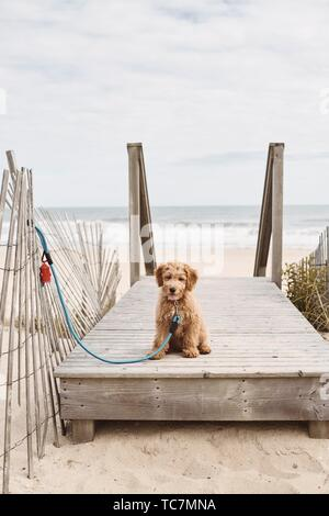 A puppy at the beach. - Stock Photo
