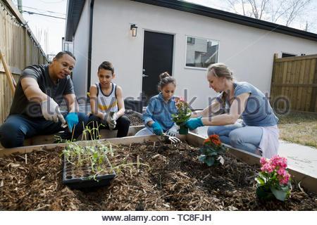Family planting flowers in sunny garden - Stock Photo