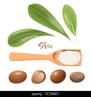 Shea nuts whole and cracked. Leaves and shea butter on wooden spoon. Shi tree pods, karite. Vitellaria paradoxa. Card template, copy space. for cosmet - Stock Photo