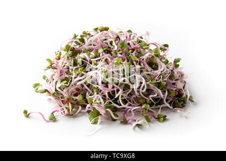 Fresh pink radish sprouts on a white background. - Stock Photo