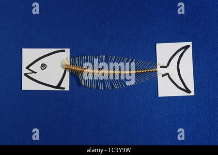 a fish on blue background. - Stock Photo