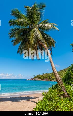 Idyllic paradise palm Anse Mayor beach on the North-West side of Mahe Island near the town of Bel Ombre, Seychelles. - Stock Photo