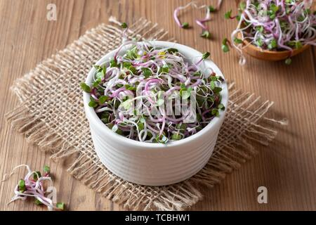 Fresh pink radish sprouts in a bowl. - Stock Photo