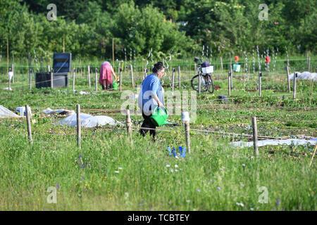 Gronsdorf, Deutschland. 05th June, 2019. Women work in their Schrebergaerten. Hobbygaertner.Kleingarten. | usage worldwide Credit: dpa/Alamy Live News - Stock Photo
