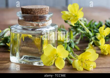 A bottle of evening primrose oil with fresh evening primrose flowers in the background. - Stock Photo