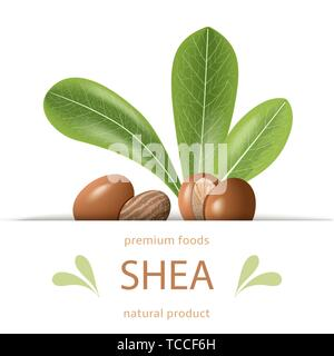 Ripe shea nuts and leaves label. shi tree pods whole and cracked. Vitellaria paradoxa. Premium foods. Card template copy space. cosmetics, aromatherap - Stock Photo