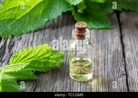 A bottle of essential oil with fresh melissa. - Stock Photo