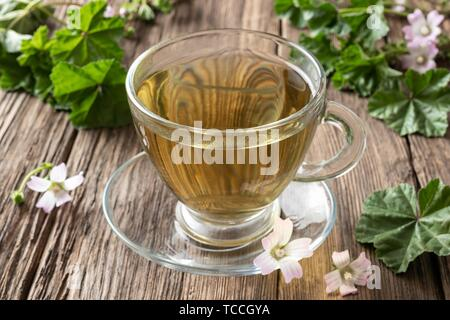 A cup of herbal tea with fresh blooming dwarf mallow. - Stock Photo