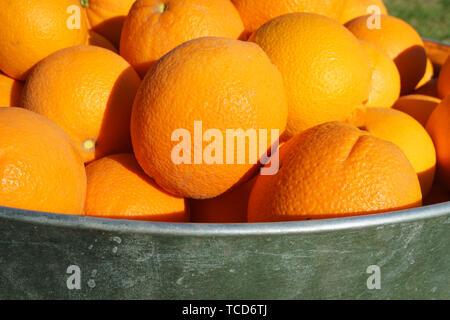 Oranges in Galvanized Metal Tub - Stock Photo